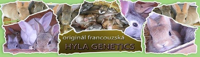 Můj chov francouzské Hyly genetics.